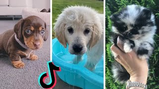 Nothing Cuter Than Cute Little Puppies ~ Funny Dogs of TIKTOK Compilation ~ The Dog Squad