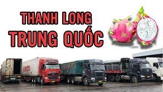Đột Nhập Chợ Trung Quốc Thu Mua Thanh Long Rớt Giá I T.h.a.n.h l.o.n.g Còn 2.000 đồng/kg