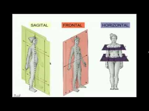 Anatomia Espacial \