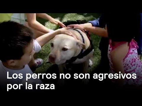 Los perros no son agresivos por la raza - Perros - En Punto con Denise Maerker