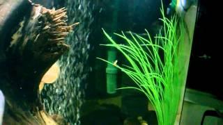 обзор моего аквариума . 200 литров , астронотусы
