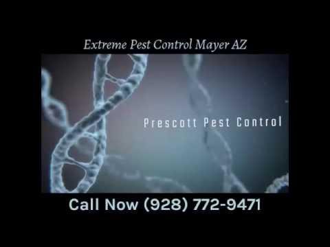 Extreme Pest Control Mayer AZ