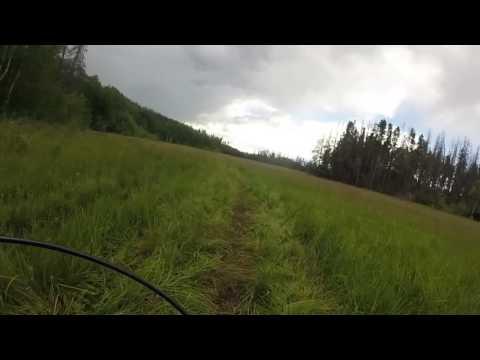 Doe Creek trail Granby, Colorado 07/03/16