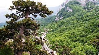 Parco Nazionale del Pollino. The Pollino's national park