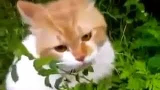 Прикольнейший кот разговаривает и прикалывается