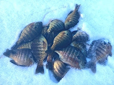 ICE FISHING Ice Report 2017/2018 Ontario