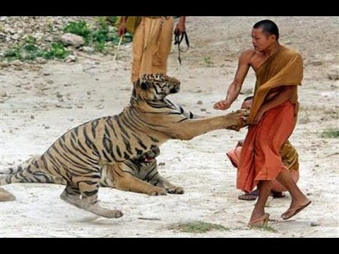 Wild Animal Attack On People !! Scary & Horrible Moments Compilation HD