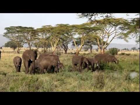 Tropical Trails Safari to Serengeti, Ngorongoro Crater, and Lake Manyara National Parks