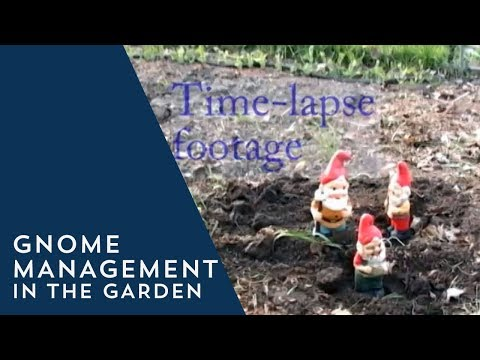 Gnome Management In The Garden
