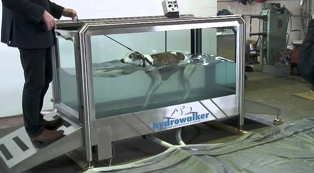 Used Dog Treadmills For Sale