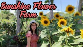SUNSHINE FLOWER FARM | SUNFLOWER FARM | TARA NA SA LALAWIGAN NG QUEZON