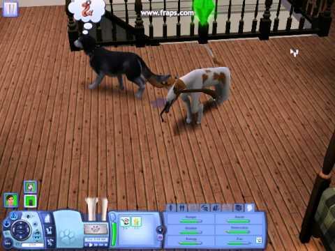 The sims 3 pets dog glitch