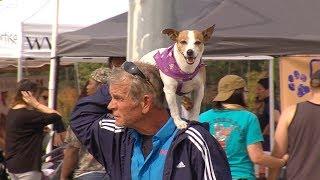 ODU Community Service ~ Chesapeake Humane Society ~ Amanda Dunlap ~ Admin & Finance