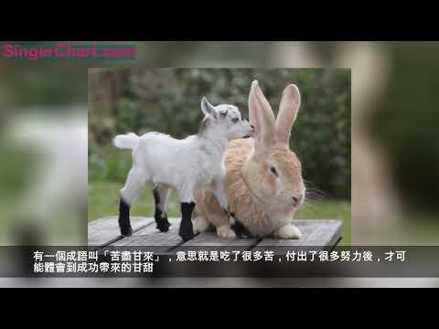 1963年56歲兔,年尾你將有一生中最大的「坎」,不跟你開玩笑!