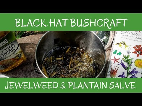 Making Jewelweed & Plantain Salve