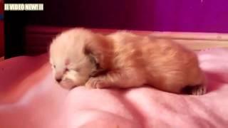 Забавные кошки и котята мяуканье
