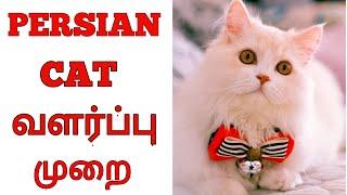 பெர்சியன் பூனை வளர்ப்பு முறை,PERSIAN CAT Valarpu Murai