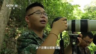 《地理·中国》 20191214 探秘热带雨林6| CCTV科教
