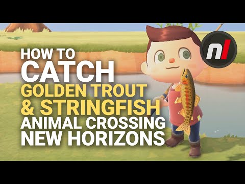 How To Catch The Golden Trout & Stringfish In Animal Crossing: New Horizons