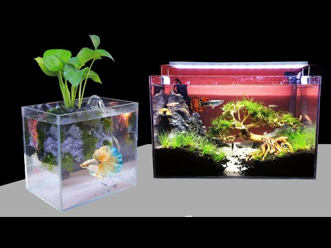 challenge-making-shallow-tank-&-nano-planted-aquarium-(diy-aquascape)---home-decor-ideas