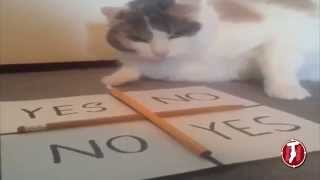 Charlie Charlie Pencil Game Challenge - Cat Hates playing Charlie charlie Devil Game!
