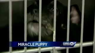 Puppy Survives 4 Weeks Locked In Car