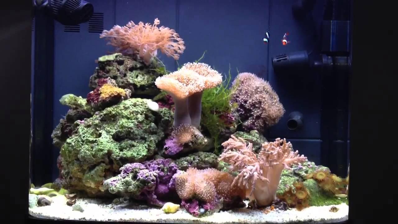Marine Bio Pearls 1000ml - Bio Aquatek Ltd