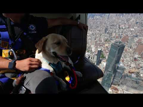 Pilots N Paws Helicopter Ride Over NYC | FlyNYON | Aerial Photography