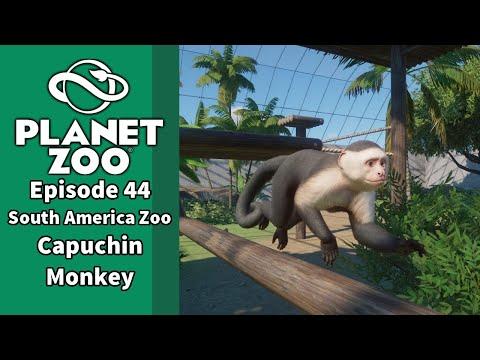 Planet Zoo Episode 44: South America Zoo, Capuchin Monkey |
