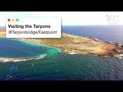 Curacao Dive Site Guide | Tarpon Bridge at Eastpoint (Oostpu