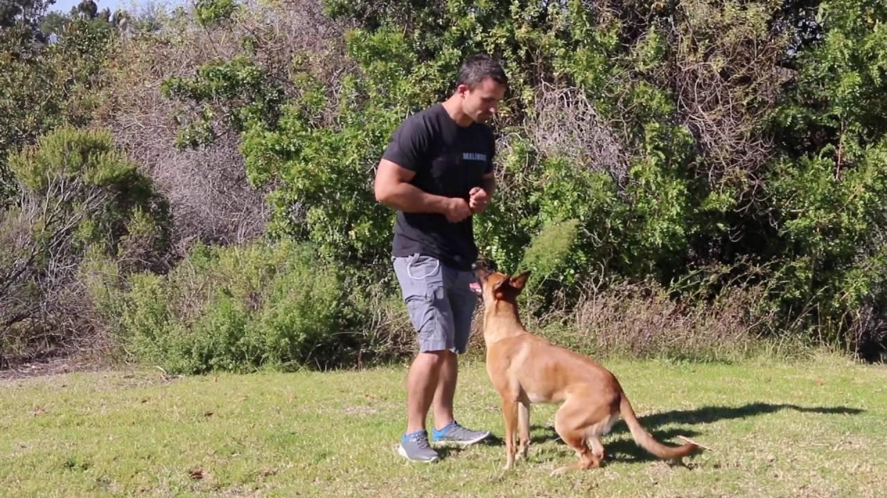 Nate Dog Training