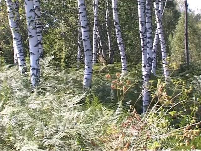 Slovenski naravni biseri: Belokranjski steljniki