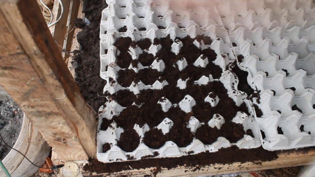 Домашняя пальма (фото) - посадка, уход и какую выбрать для выращивания