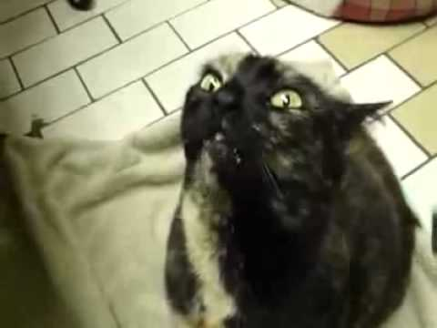 Stragatto - evoca i demoni / Кот вызывает демонов