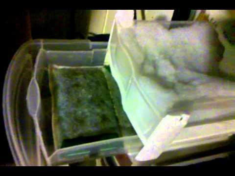 DIY Wet Dry Sump Filter for Aquarium.