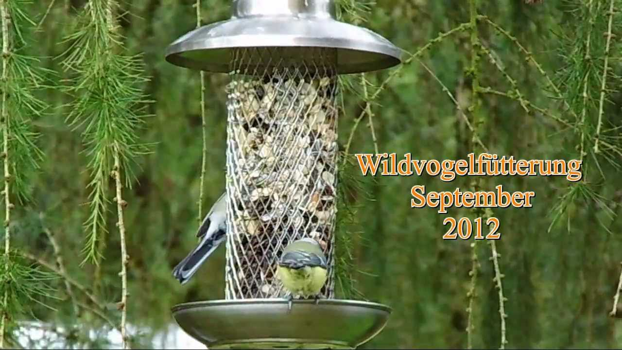 v gel im garten september 2012 birds in my garden youtube. Black Bedroom Furniture Sets. Home Design Ideas