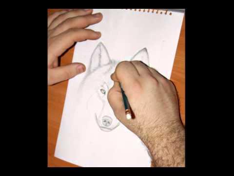 как нарисовать аляскинского маламута