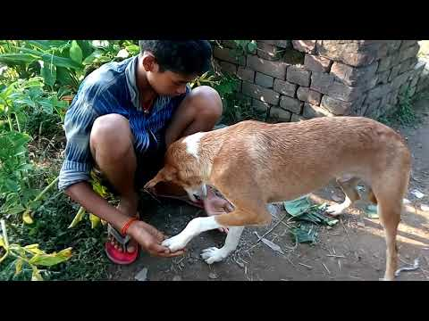 Dj sachin raj hansepur bhojpuri videos