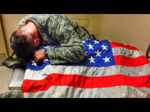 Former Military Dog Draped In American Flag After He Was Put Down