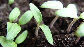 видео Фотосинтез и урожай