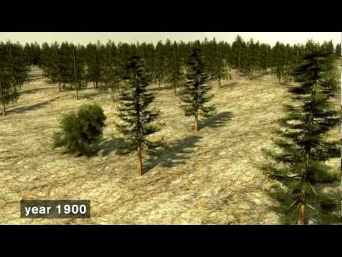 Sustainable Forestry - the Swedish model.mov
