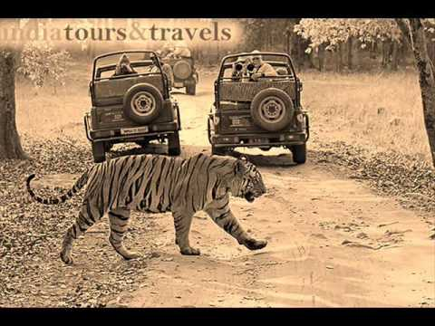 India Tour And Travels
