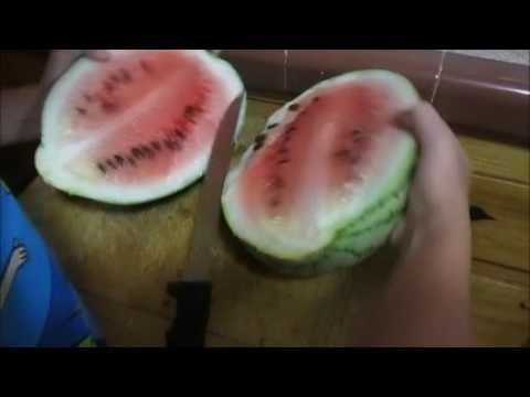 Ultra Cool Sweet Beauty Watermelon Watermelons Southern California Inland Empire Vegetable Fruit Gar