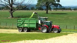 Two-tone Whole Crop Harvesting for Silage.