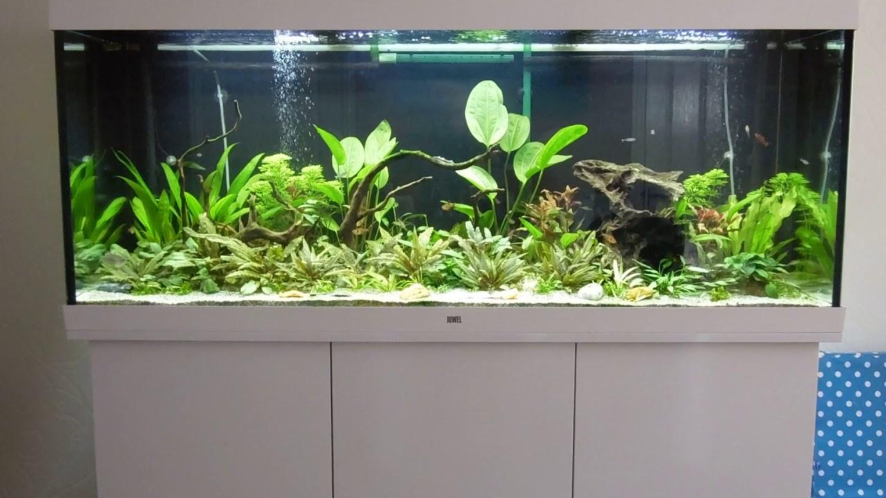 Hervorragend Ian's Juwel Rio 450 LED Aquarium - YouTube XJ83
