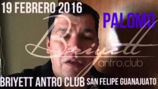 Palomo en san felipe Guanajuato