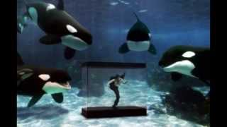 Sea World Secrets - Tilikum's Predicament Part One