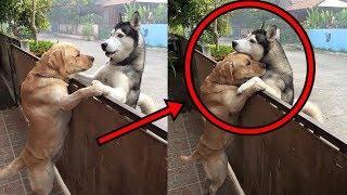 Dieser Hund ist von zu Hause weggelaufen, um seinen besten Freund zu umarmen