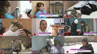 ВРЕМЕЧКО - На защите животных