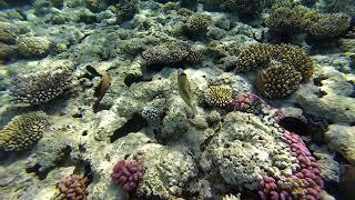 Snorkeling Sharm El Sheikh Red sea Egypt